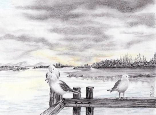 Seagulls_frances hutt